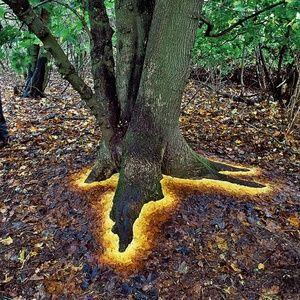 British artist Andy Goldsworthy - leaf art!